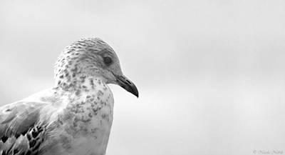 Photograph - Pigeon Pride by Nicola Nobile