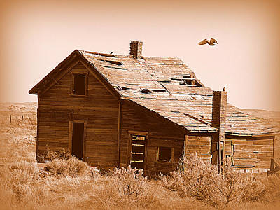 Photograph - Pigeon Shack by Cindy Wright