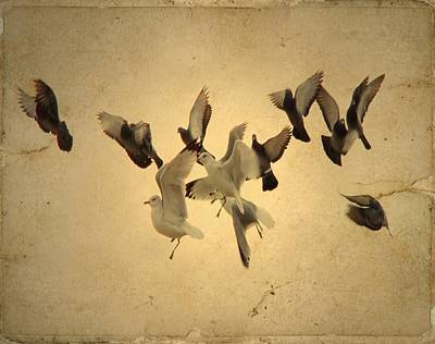 Flock Of Bird Photograph - Pigeons And Seagulls  by Gothicrow Images