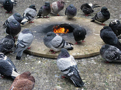 Photograph - Pigeons Around The Eternal Flame In Chicago by Ausra Huntington nee Paulauskaite