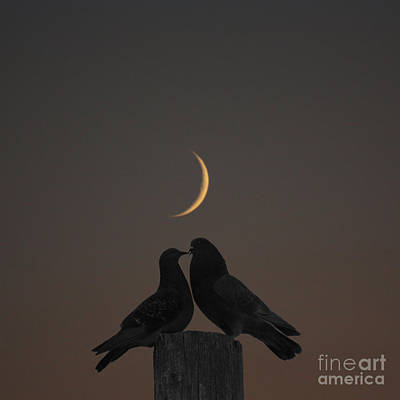 Telephone Poles Photograph - Pigeons In Love by Marjorie Imbeau