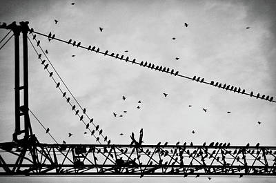 Pigeons Sitting On Building Crane And Flying Print by Image by Ivo Berg (Crazy-Ivory)