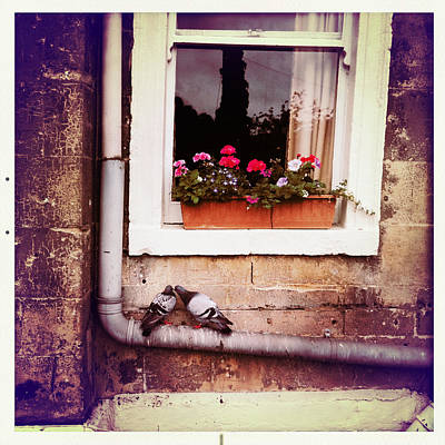 Photograph - Pigeons Under A Window With Flowers by Betse Ellis