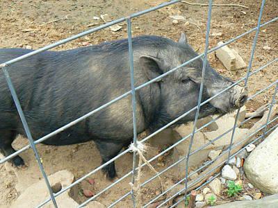 Mixed Media - Piggy by Connie Dye