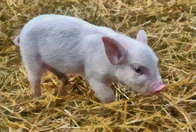 Photograph - Piglet by Michelle Calkins