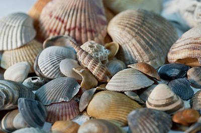 Photograph - Pile Of Seashells by Wilma  Birdwell