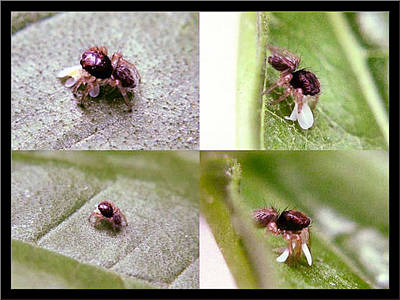 Photograph - Pin-prick Size Insect by Glenn Bautista
