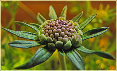 Art Print featuring the photograph Pinchshin Bud by Debbie Portwood