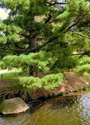 Pine Along The Water Art Print by Mindy Newman
