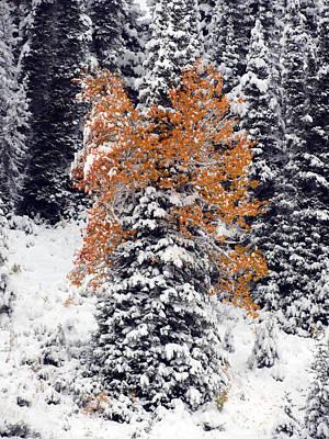 Photograph - Pine Aspen Or Quaking Fir by DeeLon Merritt