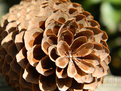 Photograph - Pine Cone  by Chalet Roome-Rigdon