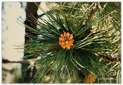 Pinion Digital Art - Pine Flower by Maxine Bochnia