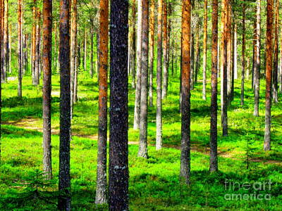 Pine Forest Art Print by Pauli Hyvonen