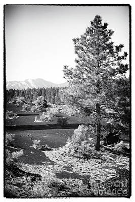Photograph - Pine In The Crater by John Rizzuto