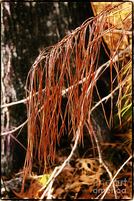 Photograph - Pine Needles by Judi Bagwell