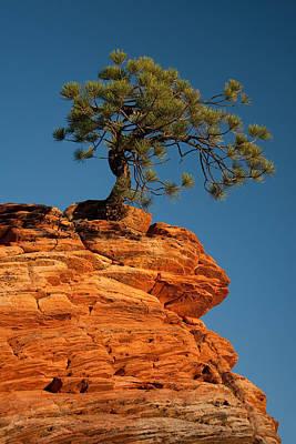Pine On Rock Print by Ralf Kaiser