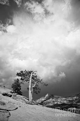 Photograph - Pine Tree On A Slab 2 by Olivier Steiner