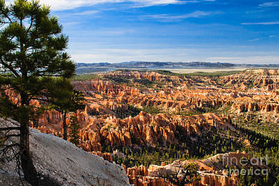 Photograph - Pine Tree View by Robert Bales