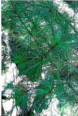 Pine With Rocks Art Print by Suzanne Fenster