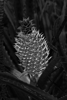 Photograph - Pineapple 001 by Elizabeth  Doran