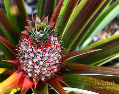 Art Print featuring the photograph Pineapple by Denise Pohl
