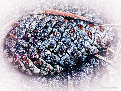 Pinecone Blues Art Print