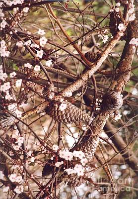 Art Print featuring the photograph Pinecones And Cherry Blossoms by Cynthia Marcopulos