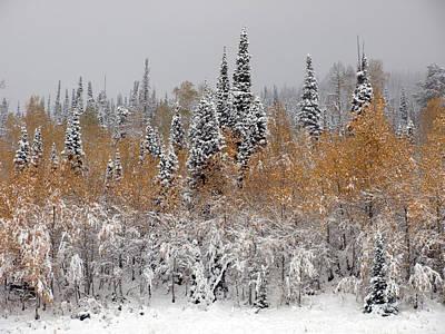 Photograph - Pines Above Fall Above Winter by DeeLon Merritt
