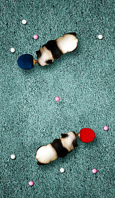 Ping Pong Digital Art - Ping Pong Pandas by Michael  Murray