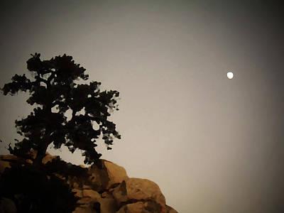 Barker Digital Art - Pinhole Of A Tree And Moon by Carolina Liechtenstein