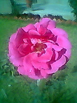 Photograph - Pink And Alone by Archana Saxena