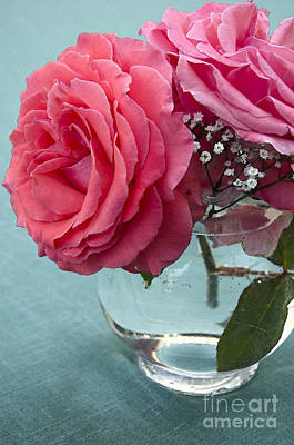 Photograph - Pink And Aqua Roses by Jim And Emily Bush