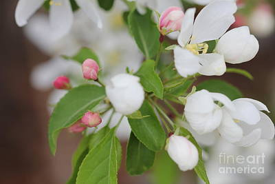 Photograph - Pink And White Blooms by Donna Munro