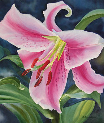 Pink And White Lily Art Print by Sharon Freeman
