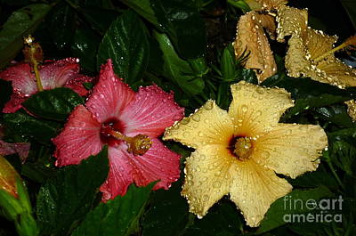 Art Print featuring the photograph Pink And Yellow Hibiscus After The Rain by Renee Trenholm