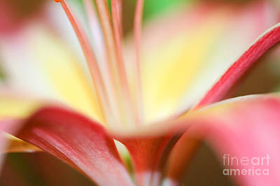 Pink And Yellow Lily 2 Art Print by Melissa Haley