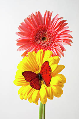 Pink And Yellow Mums Art Print by Garry Gay