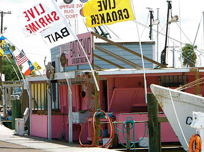 Photograph - Pink Bait Shop by Stacey Robinson