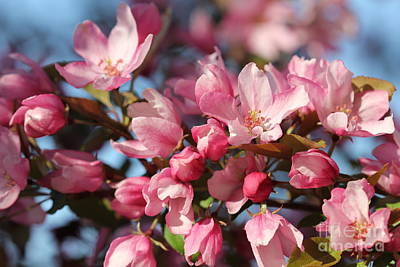 Photograph - Pink Blooms 3 by Donna Munro