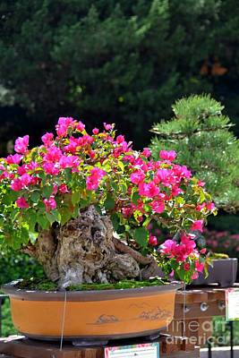 Photograph - Pink Bonsai by Bonnie Myszka