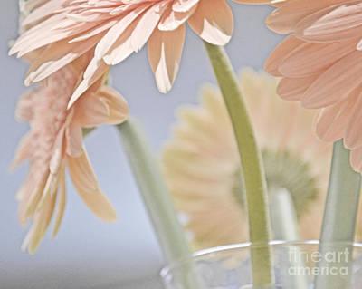 Photograph - Pink Bouquet by Traci Cottingham