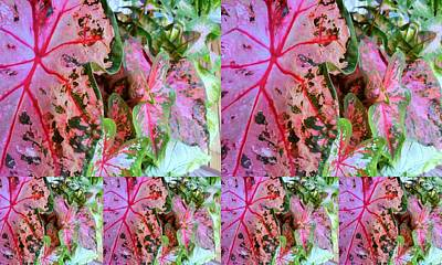 Photograph - Pink Calicium Collage  by Tim Donovan