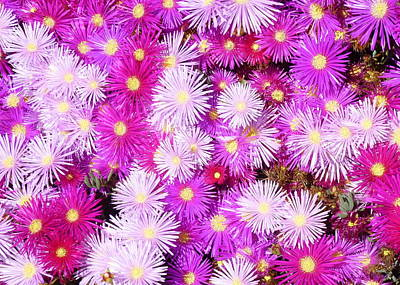 Magenta Photograph - Pink California Wildflowers by Carla Parris