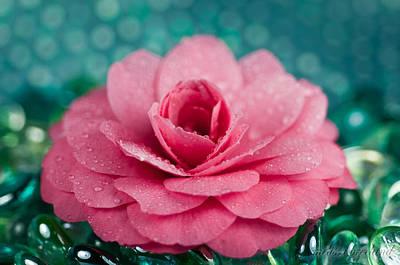 Camellia Photograph - Pink Camellia by Melissa Wyatt
