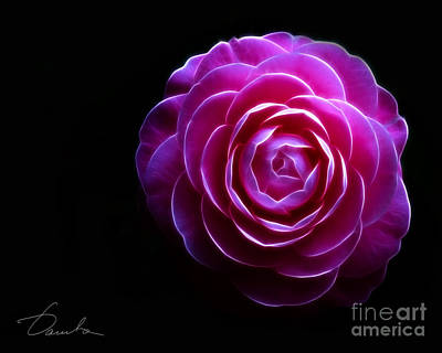 Photograph - Pink Camellia The Casual Elegance  by Danuta Bennett