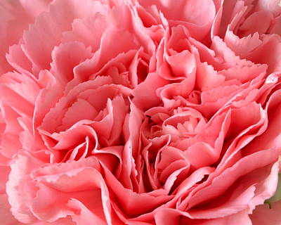 Photograph - Pink Carnation by JD Grimes