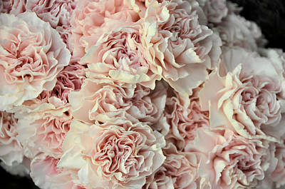 Photograph - Pink Carnations by Jan Amiss Photography