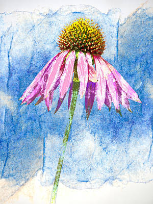 Striking Photograph - Pink Coneflower On Blue by Carol Leigh