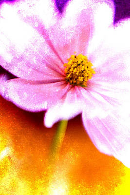 Photograph - Pink Cosmos On Orange by Carol Leigh