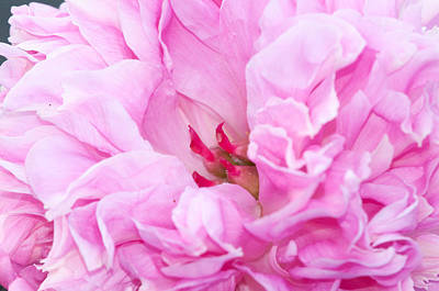 Photograph - Pink by Craig Leaper